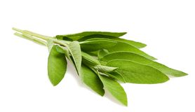 Sage sprig Royalty Free Stock Photo