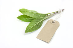 Sage and tag. Sage isolated on a white background with label tag stock images