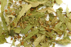 Sage tea Stock Image