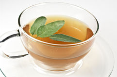 Sage tea Royalty Free Stock Image