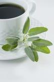 Sage Tea Royalty Free Stock Image
