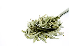 Sage tea Stock Images
