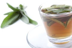 Sage tea with bunch of sage on white background Royalty Free Stock Photography