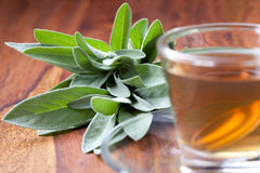 Sage tea with fresh herb, wooden flooring, Royalty Free Stock Photos