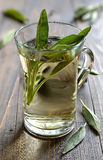 Sage tea. Glass of herbal sage tea made from freshly picked green sage leaves standing on a wooden surface Royalty Free Stock Image