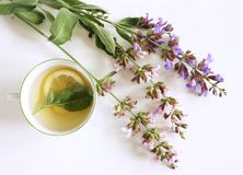Sage tea and sage leaves. Infusion made from sage leaves. Medicinal herb Salvia officinalis. The concept of healthy. Sage tea and sage leaves. Infusion made from stock image