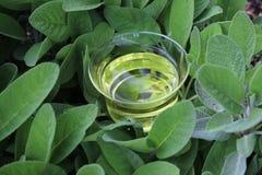 Sage tea in sage leaves stock image