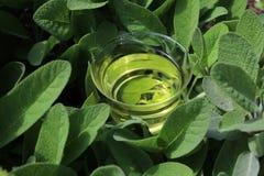 Sage tea in sage leaves royalty free stock photos