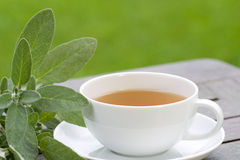 Sage tea served in the garden Royalty Free Stock Image