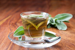 Sage tea in transparent teacup, with fresh leaf around, Stock Image