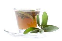 Sage tea on white background, Stock Image