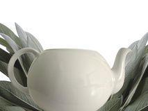 Sage and teapot Stock Photos