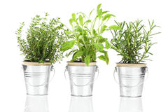 Sage, thyme and rosemary herb plant Stock Images