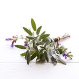 Sage tied in a bundle Stock Photography