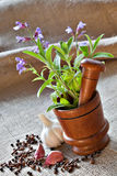 Sage in wooden mortar, garlic, pepper and cloves on sackcloth Stock Image
