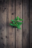 Sage on wooden table Stock Photos