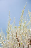 Sagebrush. This image shows desert sagebrush Stock Photos