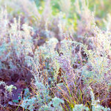 Sagebrush Stock Photos