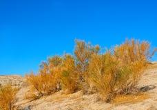 sagebrush california стоковое фото