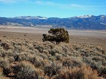 Sagebrush e montanhas Fotos de Stock Royalty Free