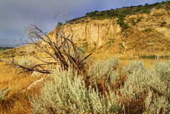 Sagebrush e penhascos do sandstone Foto de Stock