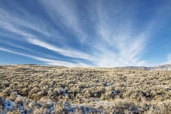 Sagebrush field Stock Photography