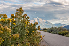 Sagebrush in Foreground, Mount Sopris in Distance. Mount Sopris of the Elk Mountain Range in the distance with sagebrush blooming along walking and biking path royalty free stock photography