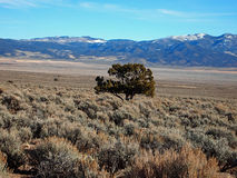 Sagebrush and Mountains. A long valley of sagebrush with blue mountains behind Royalty Free Stock Photos