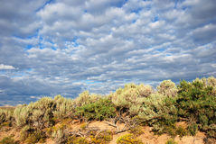 Sagebrush and other plants. Sagebrush, rabbit brush and grease wood against an interesting cloudy sky Royalty Free Stock Image
