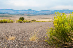 Sagebrush by the Road. A green sagebrush by the desert road Royalty Free Stock Photos