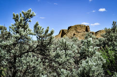 Sagebrush in Spring at Aztec Ruins. Sagebrush at Aztec Ruins National Monument, a World Heritage Site on a beautiful sunny spring afternoon in New Mexico Royalty Free Stock Photography