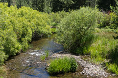 Sagehen Creek in the Sierra Nevada Stock Photography