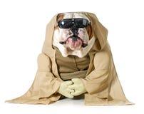 Sagesse de chien photo libre de droits