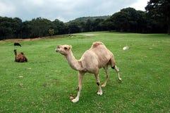 Saggezza animale fotografia stock