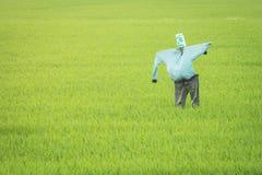 Saggezza dello spaventapasseri e di agricoltura degli agricoltori Fotografia Stock Libera da Diritti