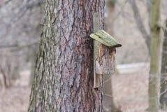 Sagina nell'albero Fotografia Stock