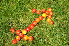 Sagittarius. November22-December 21,zodiac sign,made of plums on grass,see series Royalty Free Stock Image