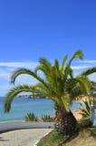 Sago Palm Latin name Cycas revoluta Royalty Free Stock Photo