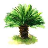 Sago palm tree with green grass, tropical sago cycad, japanese or king sago, isolated, hand drawn watercolor. Illustration on white background stock illustration