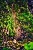 Sagolik gammal ek arkivfoto