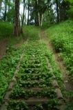 sagolik skog royaltyfri fotografi