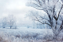 sagolik vinter Royaltyfria Bilder