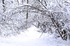 Sagolik vinter i skogen Royaltyfri Foto