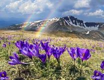 Sagolika fantastiska blommor Arkivbild
