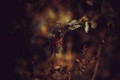 Sagolika frukter royaltyfria foton