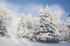 Sagolika träd i snön för jul Frostig morgon i t Arkivbild