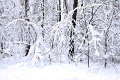 Sagolika vinterskogträd i snön och snödrivorna Arkivfoto