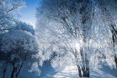 Sagolikt ljus till och med detäckte trädfilialerna arkivfoto