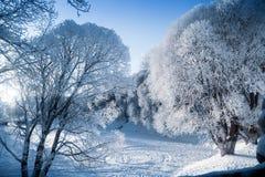 Sagolikt ljus till och med detäckte trädfilialerna på en vinterdag arkivbild