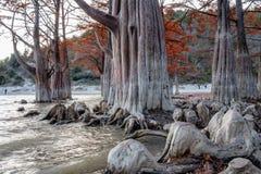 Sagolikt rött trä för träskcypressträd i Sukko sjön vid Anapa, Ryssland Sceniskt landskap för härlig dramatisk höst arkivfoto
